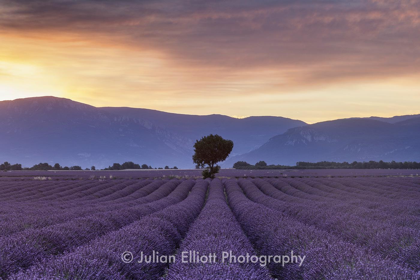 Lavender fields on the Plateau de Valensole, Provence.