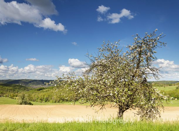 Lone tree in Dordogne