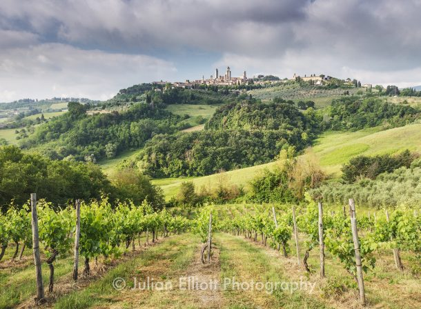 Vineyards near to San Gimignano