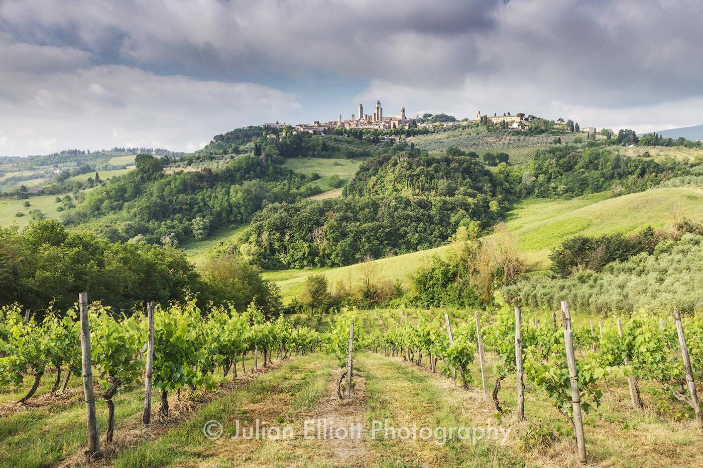 Vineyards near to San Gimignano