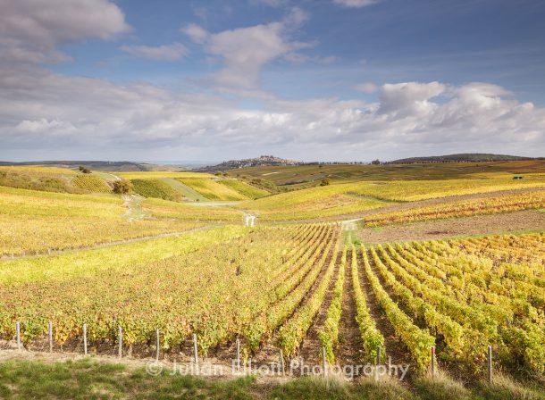 Autumn color in the vineyards of Sancerre