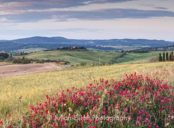 Wildflowers in the Val d'Orcia