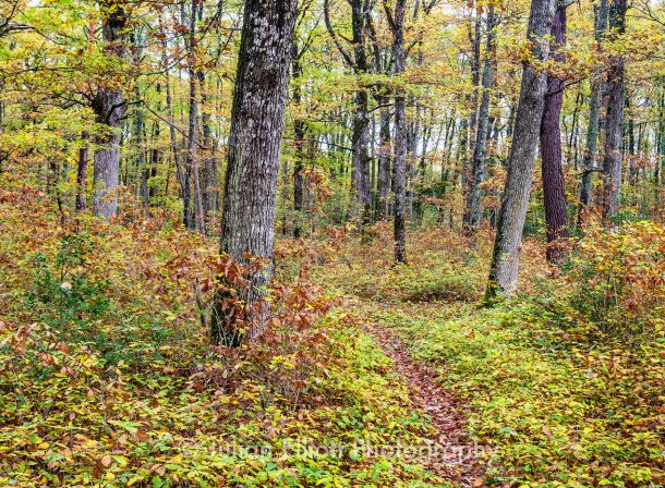 Autumn colour in an old woodland in central France.