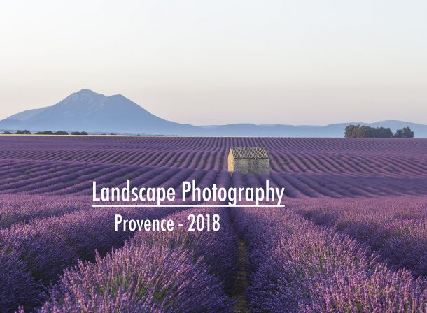 Lavender fields on the Plateau de Valensole, Provence, France.