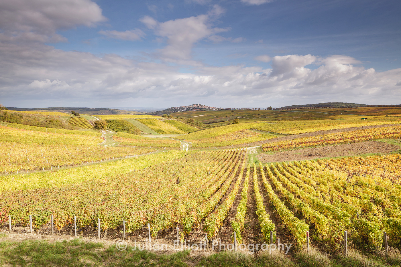 Autumn color in the vineyards of Sancerre, France.