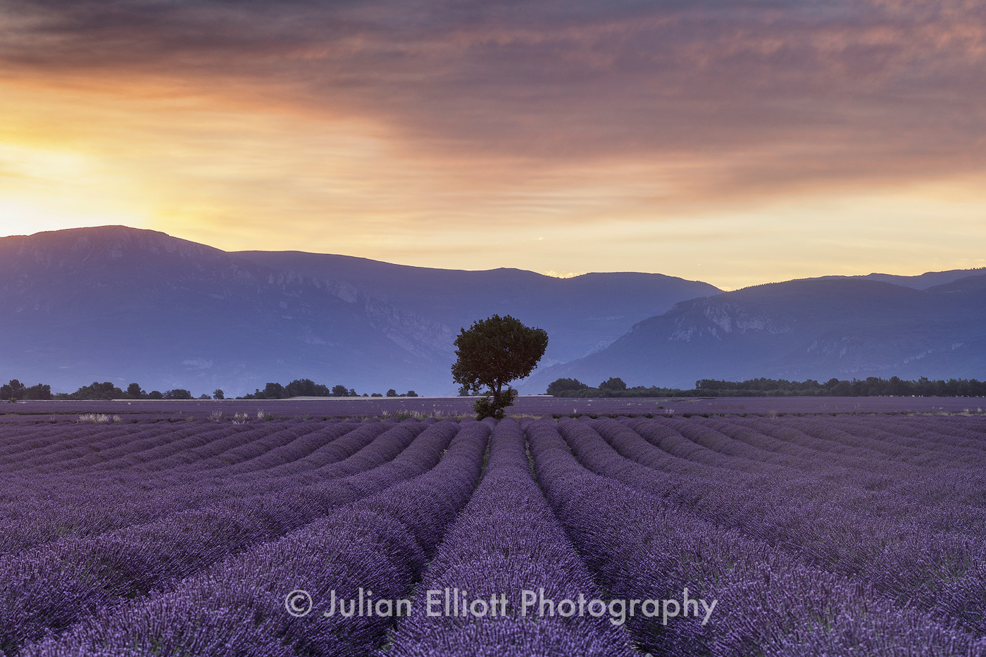 Lavender fields on the Plateau de Valensole, Provence.