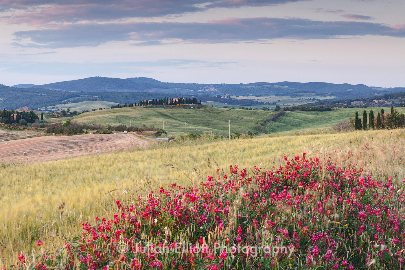 Wildflowers in the Val d'Orcia, Tuscany.