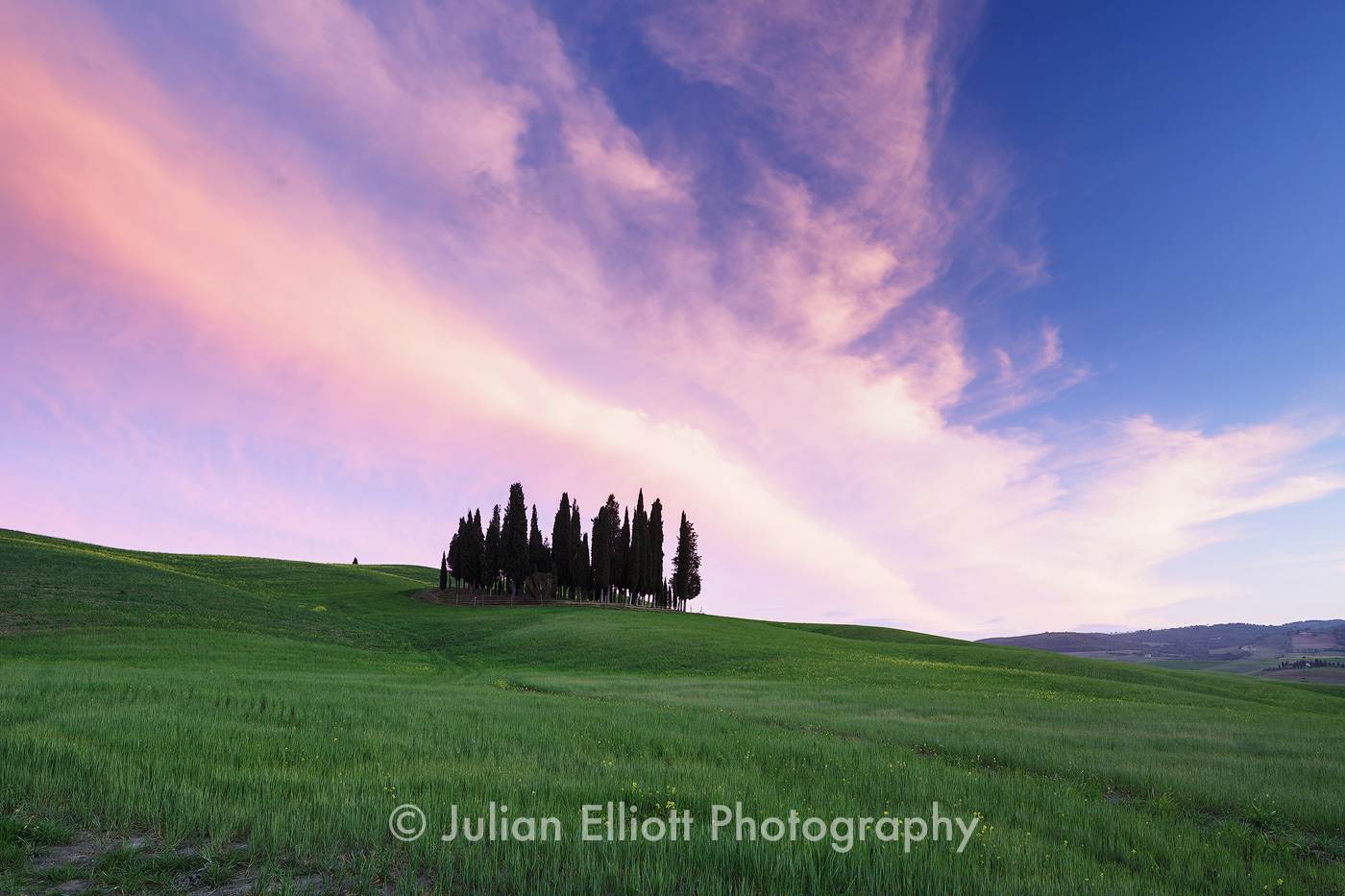 Cypress trees in the Val d'Orcia in Tuscany.